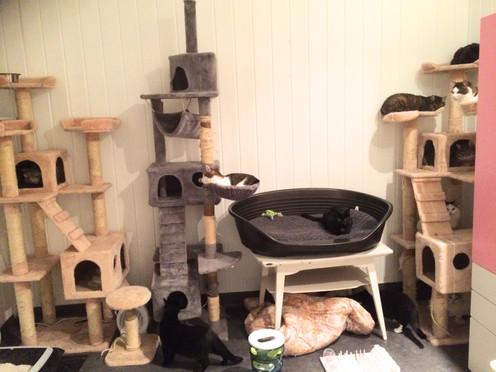 Drømmen om kattehuset (oppdatert)