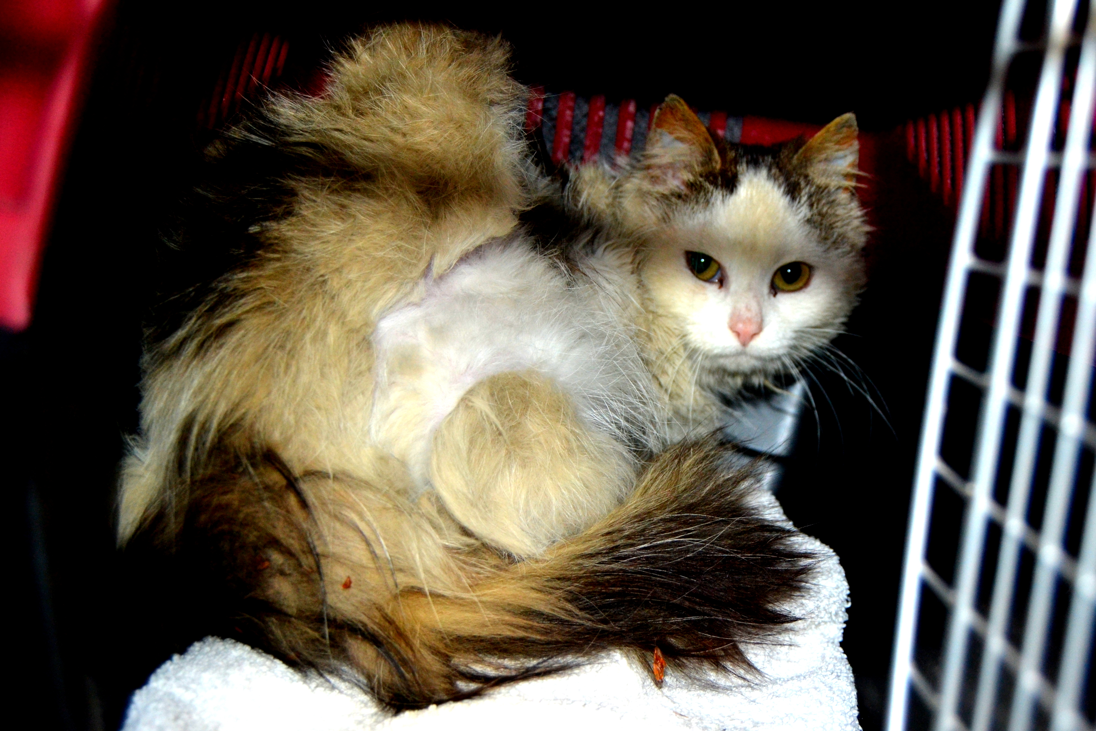 8fee78e948a9 Sammenfiltret pels - et smertefullt hverdagsproblem   potesporihjertet