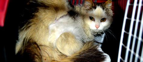 Sammenfiltret pels - et smertefullt hverdagsproblem