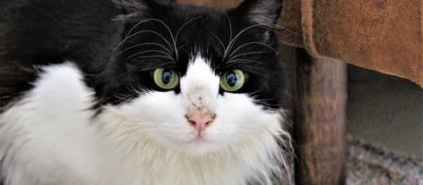 Tips for å forstå og kommunisere med katten
