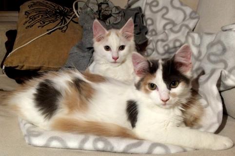 Adoptert: Milo og Mira <3
