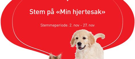 STEM: Hjelp oss å vinne 250 000 kr til kattene!
