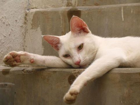 Suksessfull kattepest-behandling