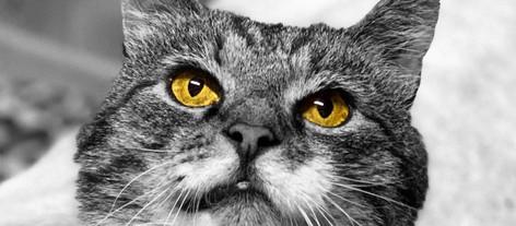 Når katten trenger øyebehandling