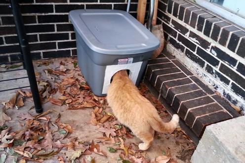 Hvordan lage billige og enkle varmekasser for katter i kulda