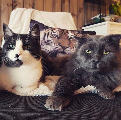 Veileder: Hvordan få katter med stor aldersforskjell til å trives sammen