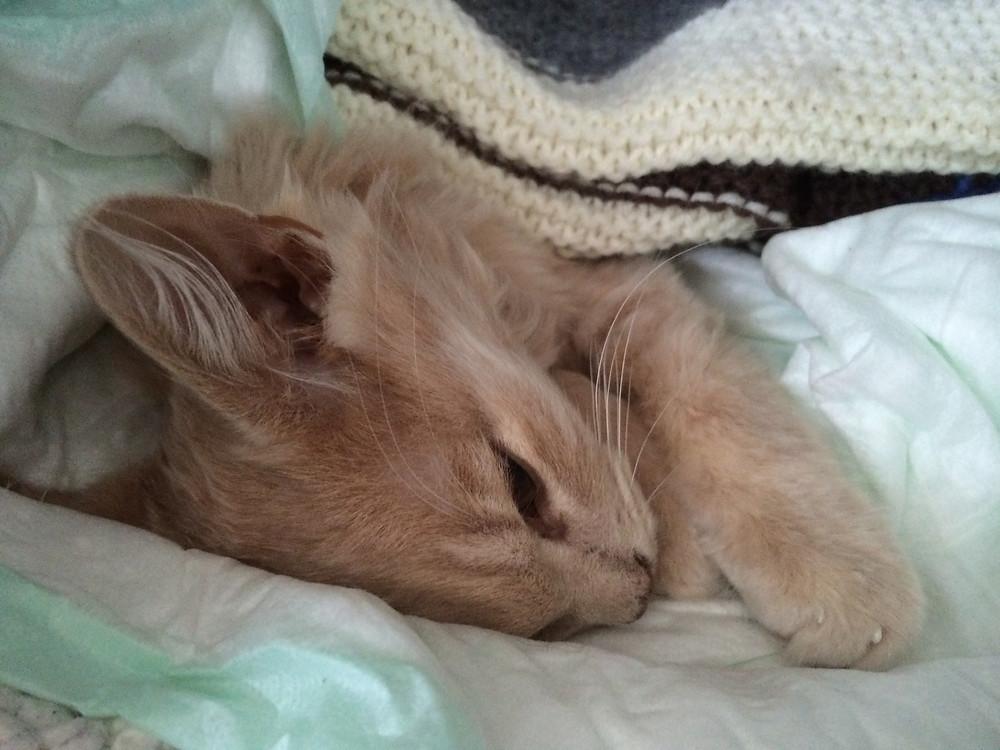 Charlie natta etter han ble syk. Jeg tok han med til veterinær kl 2, overvåket han ved senga, men ingenting kunne redde han...