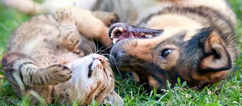 Veileder: Hvordan tilvenne katt og hund hverandre