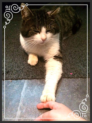 Tobias, katten som startet alt