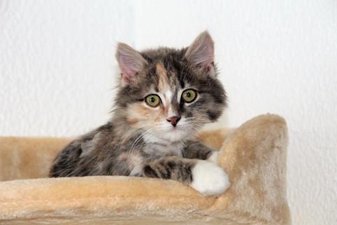 Veileder: Å ha kattunge