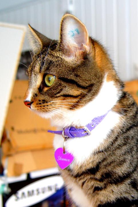 ID-merking - En livslang gave for deg og katten din