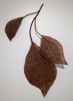 Skeletonized Poplar leaves