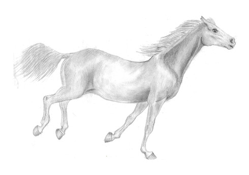 Doms Horse Drawing (1).jpg