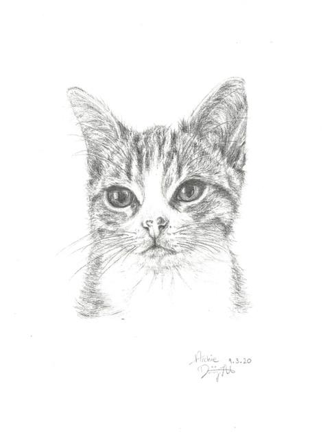 200527 Cat 1.jpg