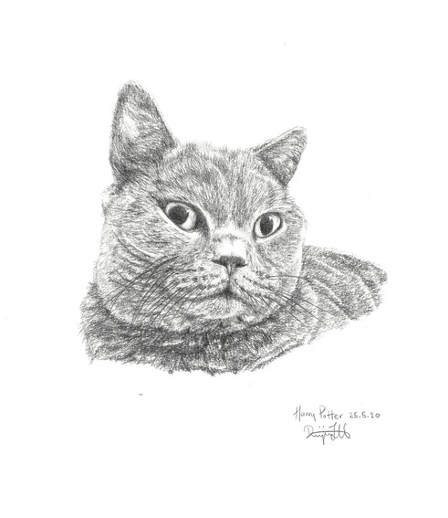 200527 Cat 2.jpg