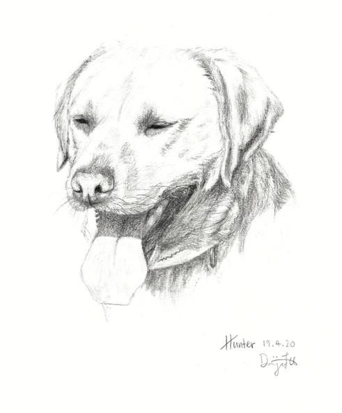 200430 Labrador.jpg