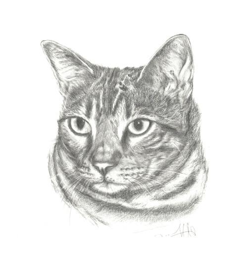 Drawing of Hugo the cat Dad adjusted.jpg