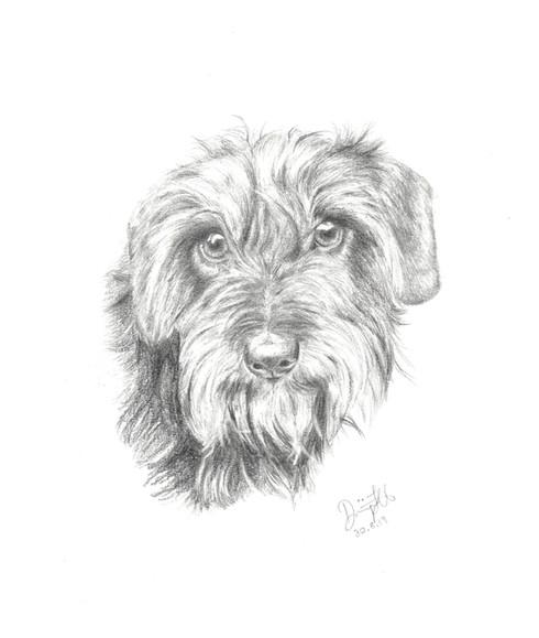 190830 Terrier.jpg