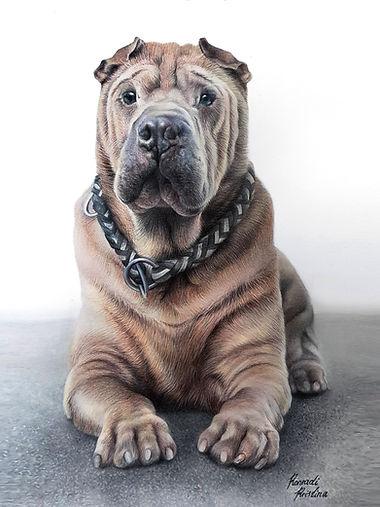 Hund Kopie.jpg