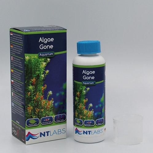Aquarium - Algae Gone