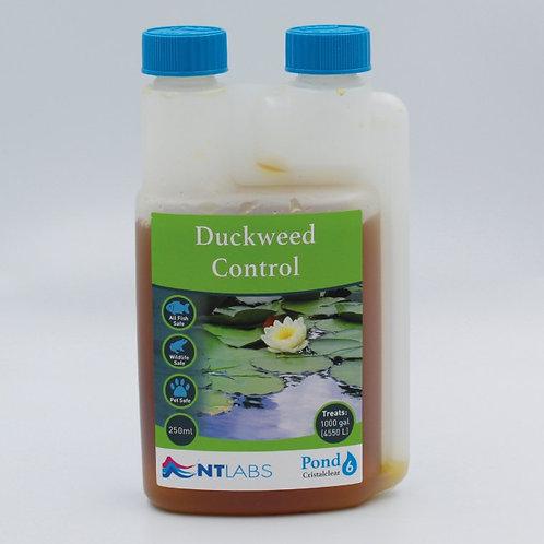 Pond - Duckweed Control