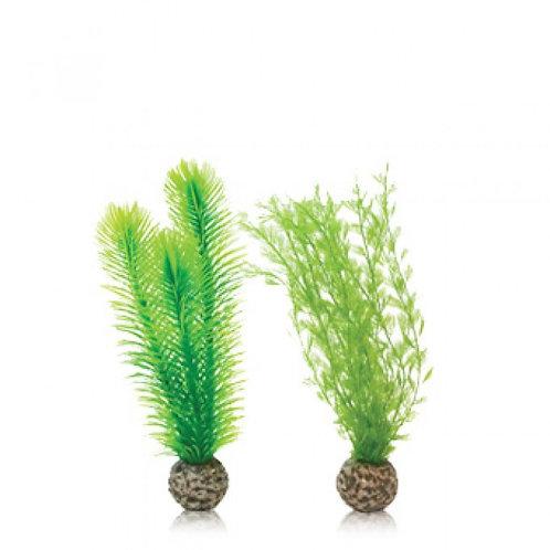 Biorb Feather Fern Plant Small