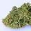 Thumbnail: CHERRY WINE (CBD 15%, THC 0.29%) (แพคทดลอง 100 เมล็ด)
