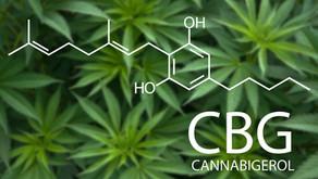 สเปนผสมพันธุ์กัญชงที่ให้สาร CBG สูง และ THC เท่ากับ 0% ได้เป็นรายแรกของโลก