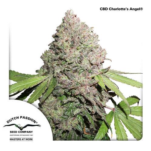 CBD Charlotte's Angel® (ซีบีดี 10-16 % ทีเอชซี <1%) เพศเมีย แพคละ 100 เมล็ด