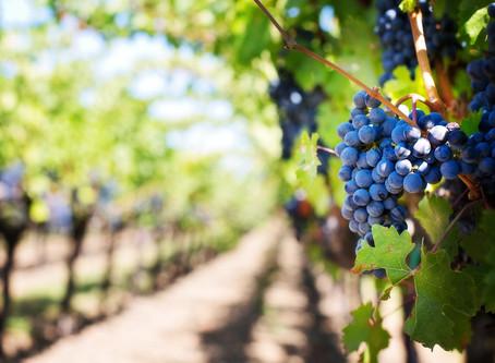 תרבות היין בפורטוגל