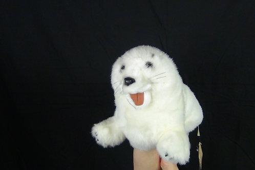 Harp Seal - (D)