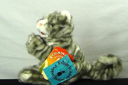 Kitten - (D) Cat