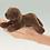 Thumbnail: Mini Chocolate Lab - (D)