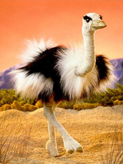 Ostrich - (D)