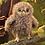 Thumbnail: Owlet