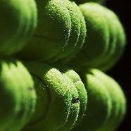 tennis-balls-800x300_edited.jpg