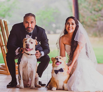A couple and two dogs at their wedding.