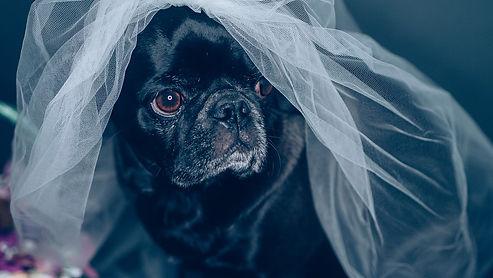 pet-wedding-5119240_1280.jpg