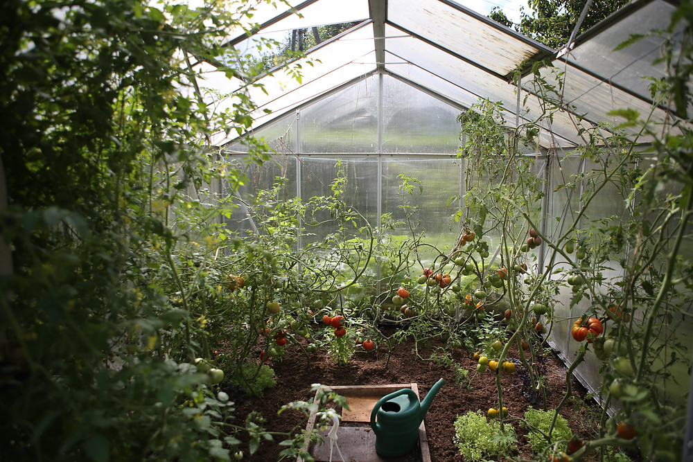 Start a garden in a greenhouse to grow food year round