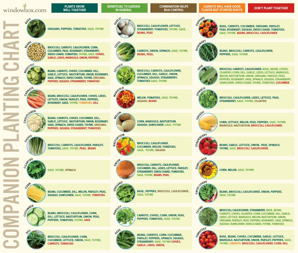 Companion planting chart make a difference organics