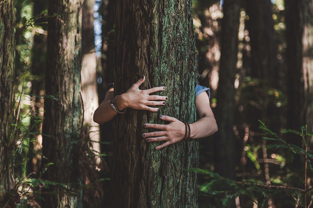 Hug a tree. Grow more forests to combat climate change