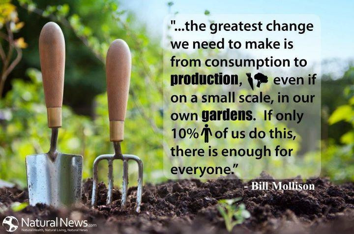 """...the greatest change we need to make is from consumption to production, even if on a small scale, in our own gardens. If only 10% of us do this, there is enough for everyone."" - Bill Mollison (the grandfather of permaculture) inspirational eco friendly quotes Mad organics"