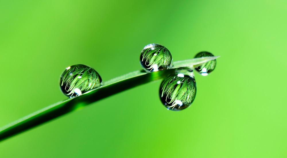 ultrahydrophobic plants do not absorb water