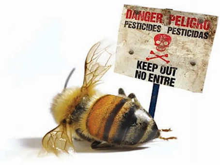 Make a difference - How to save the bees this Spring