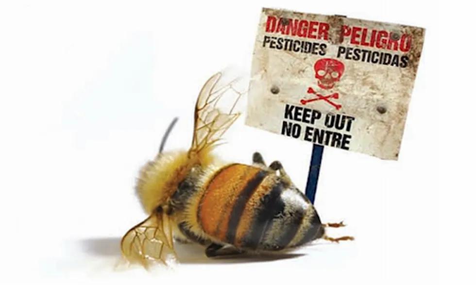 Danger sign pesticides kill bees
