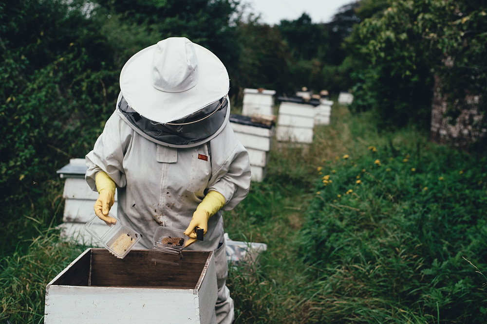 Proffesional beehive remover