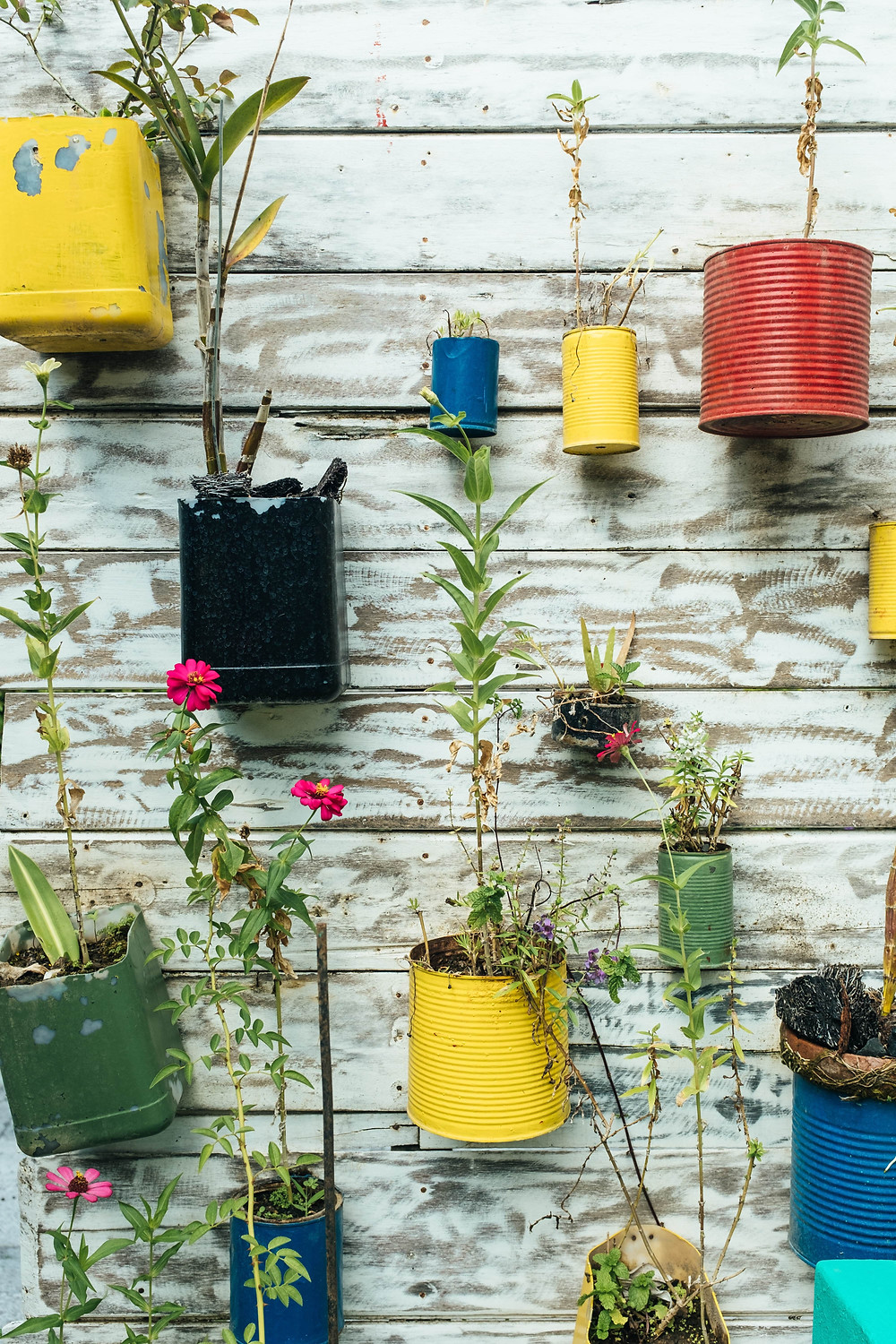 Upcycle cans to use them for flower pots