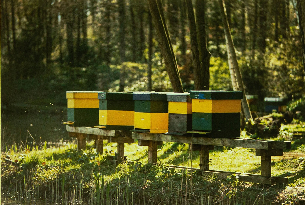 DIY beehives for your garden