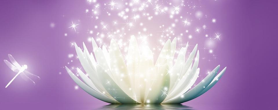 obrázek lotos.jpg