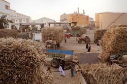 Sugarcane Logistics